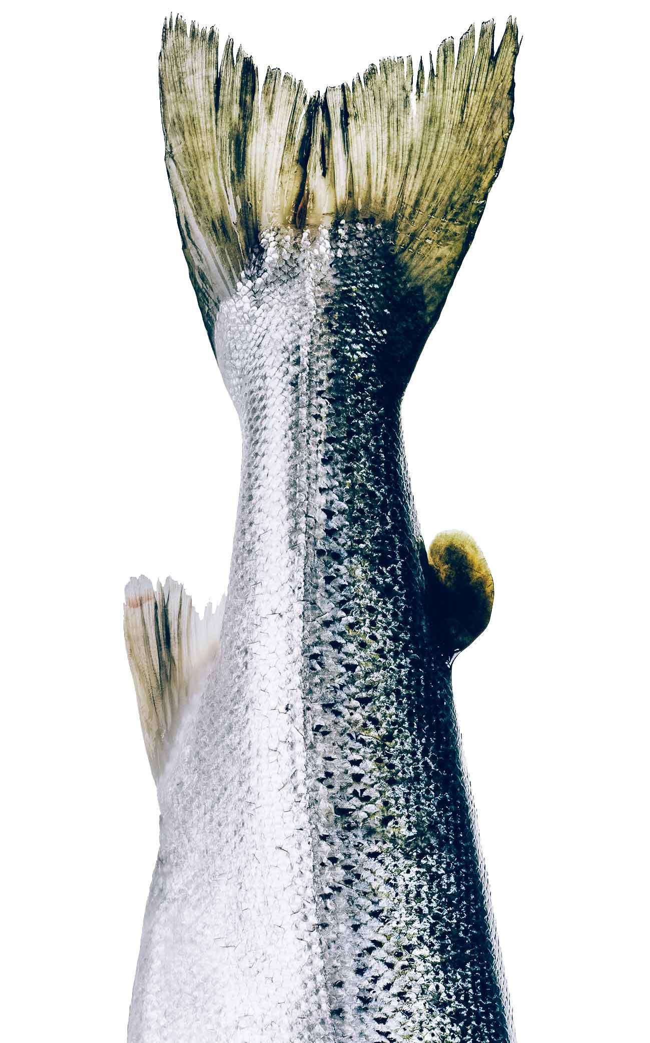 fisk-retail-vaerdi